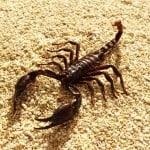 L'homme scorpion en amour : Comment le séduire