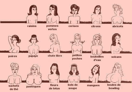 differentes-formes-de-seins
